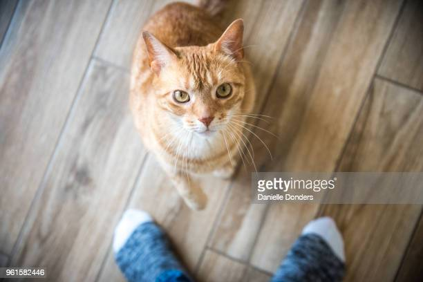Cat between owner's feet looks up at camera