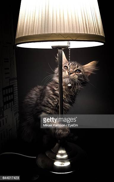Cat By Illuminated Lamp At Home
