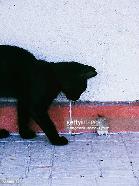 Cat By Mouse Against Wall