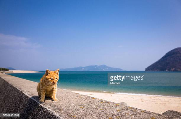 A cat by the seashore
