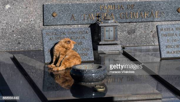 A cat cat grooms itself on one of the tombs at the old cemetery behind the Parish Church of Matosinhos during the visit by participants of...