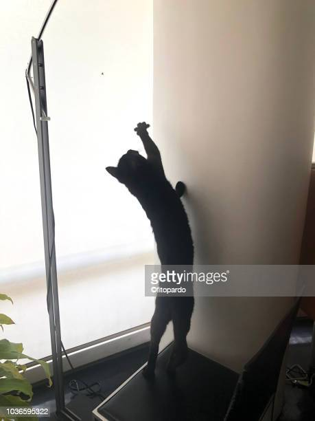 Cat catching a spider