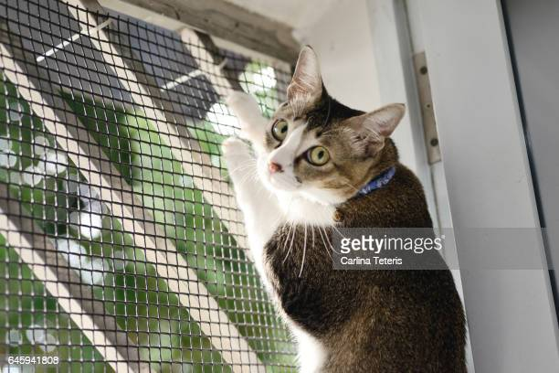cat caught climbing up a meshed door - caught in the act stock pictures, royalty-free photos & images