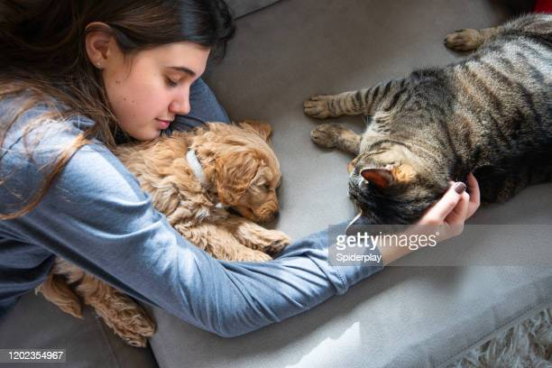 cat checks out miniature golden doodle puppy asleep with his owner - domestic cat stock pictures, royalty-free photos & images