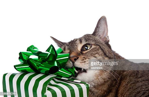 Cat Chewing on Present
