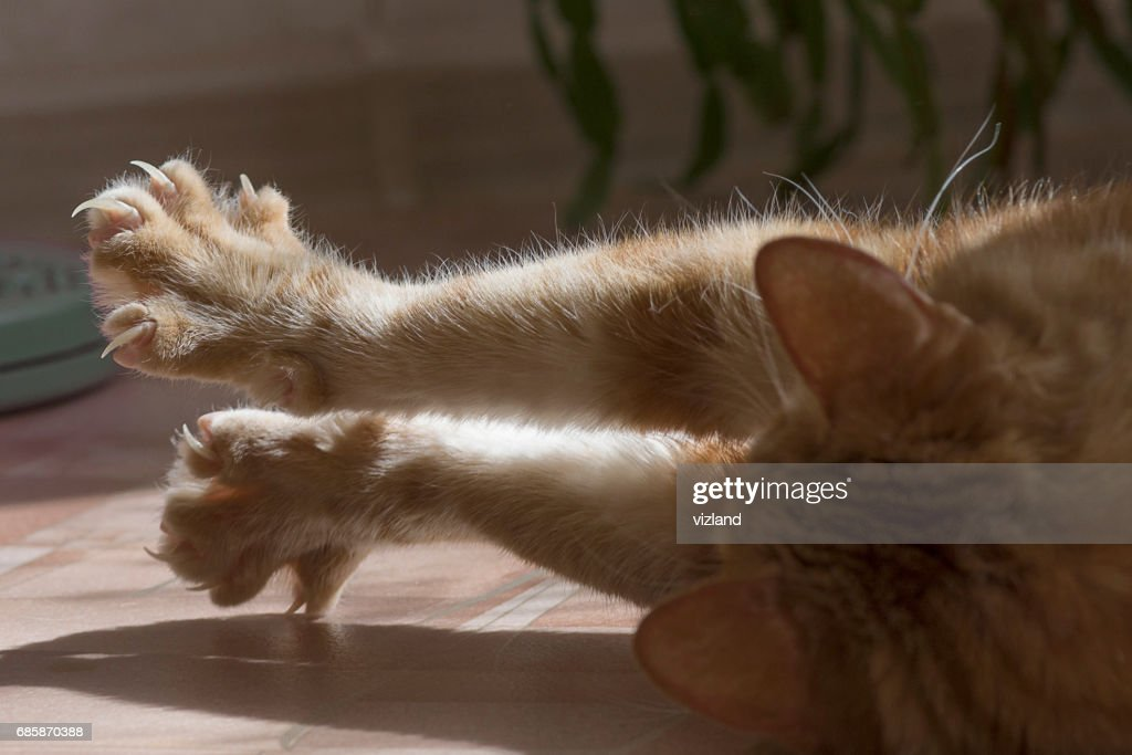 Cat clawed foot : Stock Photo