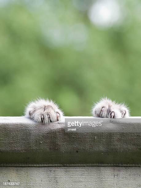 Cat-Claws