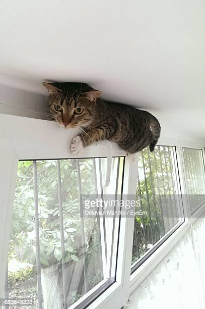 Cat Climbed On Window