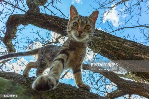 Cat climbing on the tree