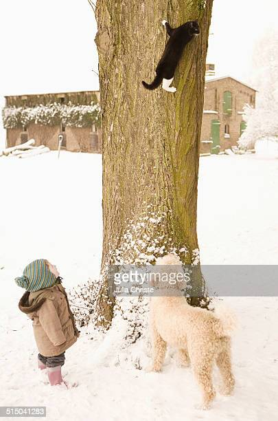 Cat climbing on tree, baby girl and Portuguese Water Dog watching
