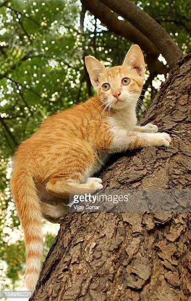 Cat climbing on tree
