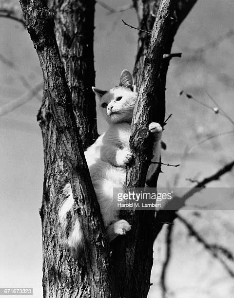 cat climbing on tree trunk - pawed mammal stock pictures, royalty-free photos & images