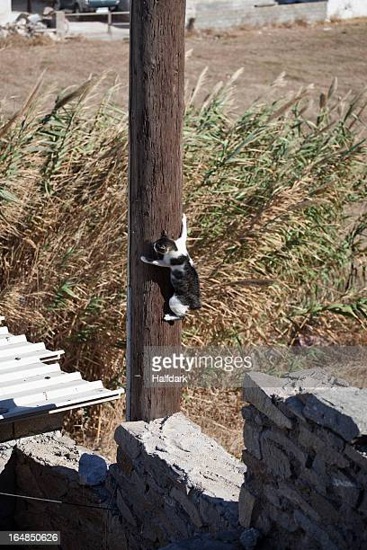 Cat clinging to telegraph pole