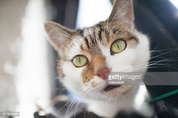 cat close portrait - jcbonassin stock pictures, royalty-free photos & images