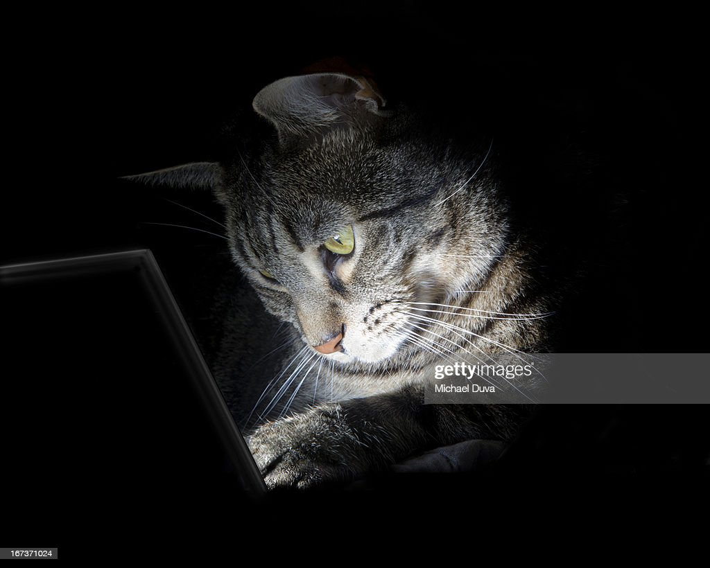 cat concentrating using table computer : Stock Photo