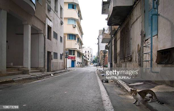 BYLINEA cat crosses an empty street on January 16 2011 in the center of Tunis Dozens of people crowded on Sunday at the few stalls open at the main...