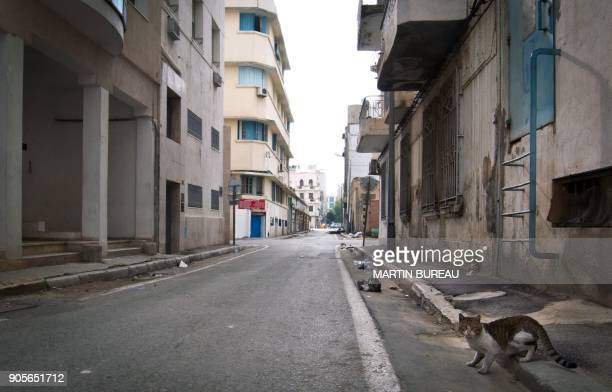 A cat crosses an empty street on January 16 2011 in the center of Tunis Dozens of people crowded on Sunday at the few stalls open at the main market...
