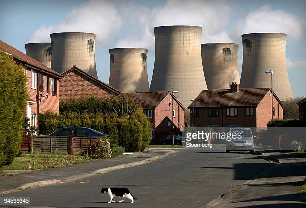 A cat crosses the road on a housing development in the shadow of Drax Power station near Selby in north Yorkshire UK Tuesday March 13 2007