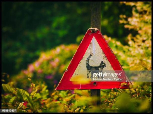 Cat Crossing Sign In Forest