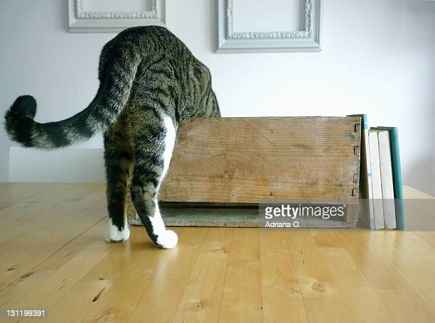 Cat curious about box