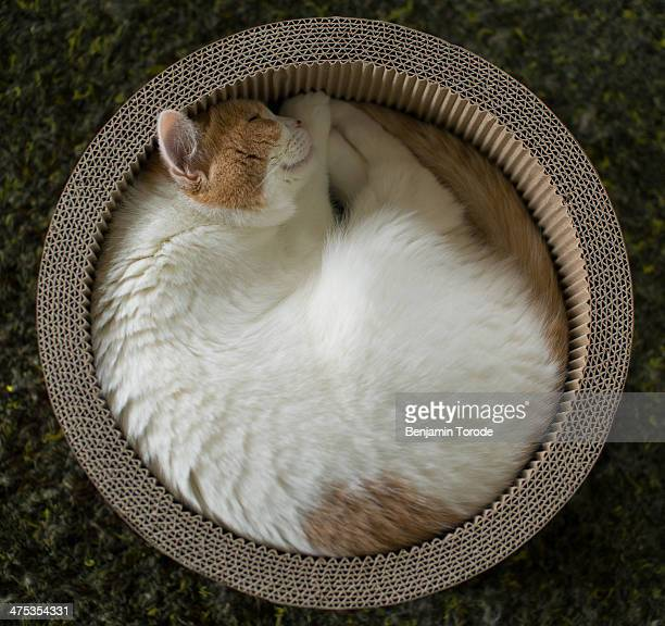 Cat curled up in circular container