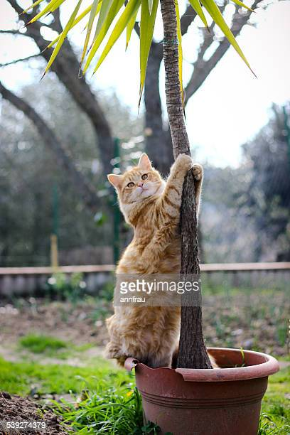 cat dance - annfrau stock photos and pictures