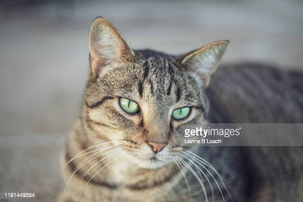 cat day - lianne loach stock pictures, royalty-free photos & images