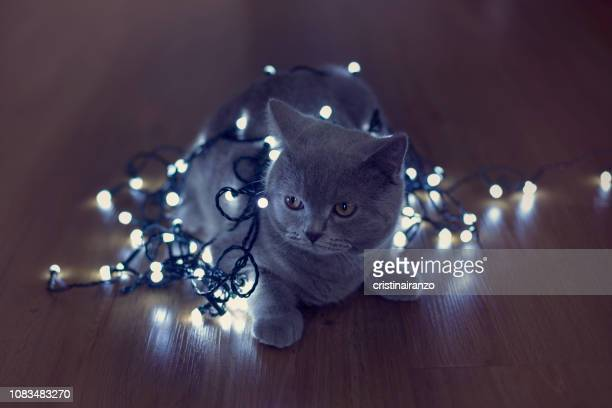 cat decorated with christmas lights - christmas kittens stock pictures, royalty-free photos & images