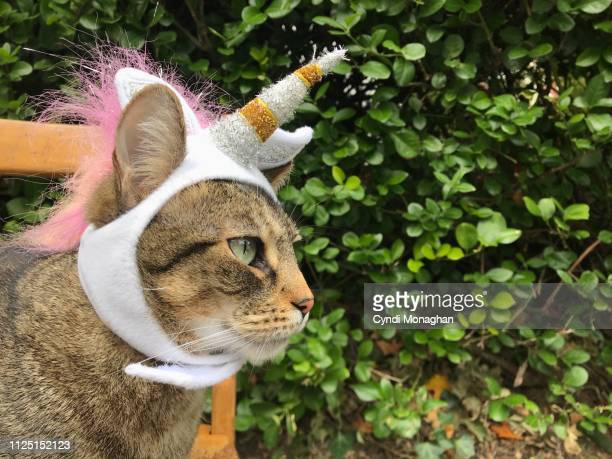 cat dressed in a unicorn costume - cat costume stock photos and pictures