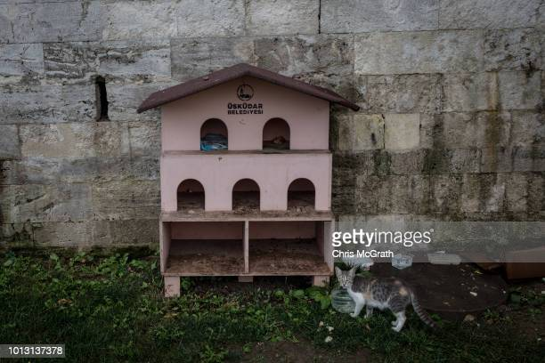 A cat drinks water in front of a cat house at the Uskudar mosque on August 8 2018 in Istanbul Turkey Istanbul is known as the City of Cats and...
