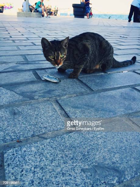 Cat Eating Fish On Footpath