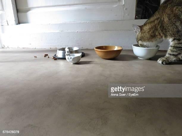 Cat Eating Food From Bowl At Home