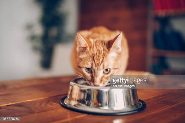 cat eating out of bowl - cat family stock pictures, royalty-free photos & images