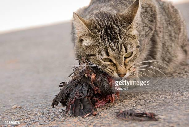 katze isst bird - tiere bei der jagd stock-fotos und bilder