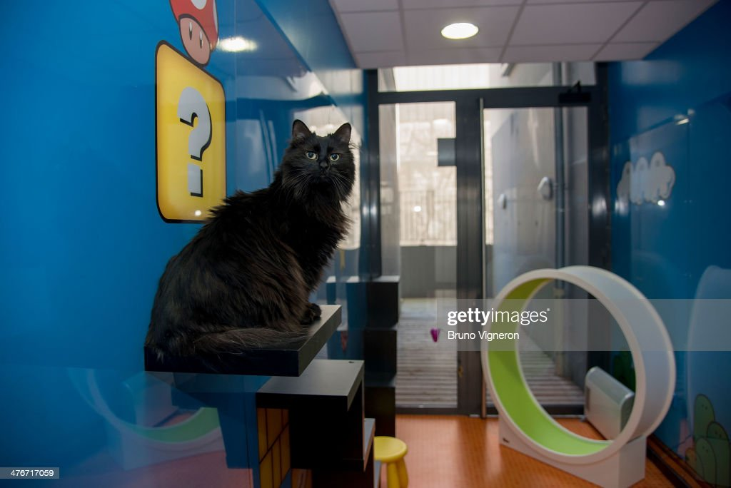 Roomer A Hotel For Cats In Lyon Photos and Images Getty Images