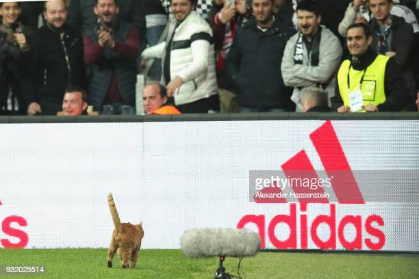 A cat enterst the field of play during the UEFA Champions League Round of 16 Second Leg match Besiktas and Bayern Muenchen at Vodafone Park on March...