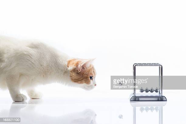 Cat examining Newton's cradle