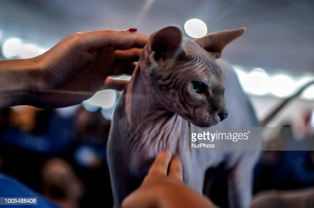 Cat exhibition in Sao Paulo Brazil on July 25 2018