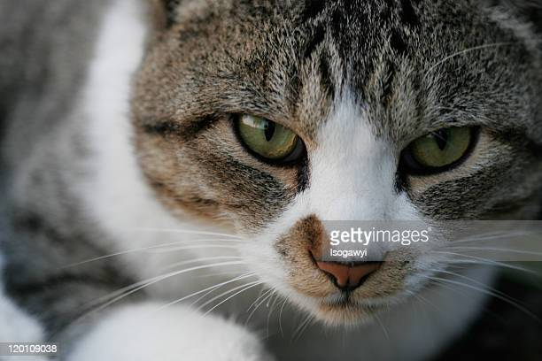 cat eyes - isogawyi stock pictures, royalty-free photos & images