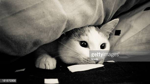 cat eyes - cat hiding under bed stock pictures, royalty-free photos & images