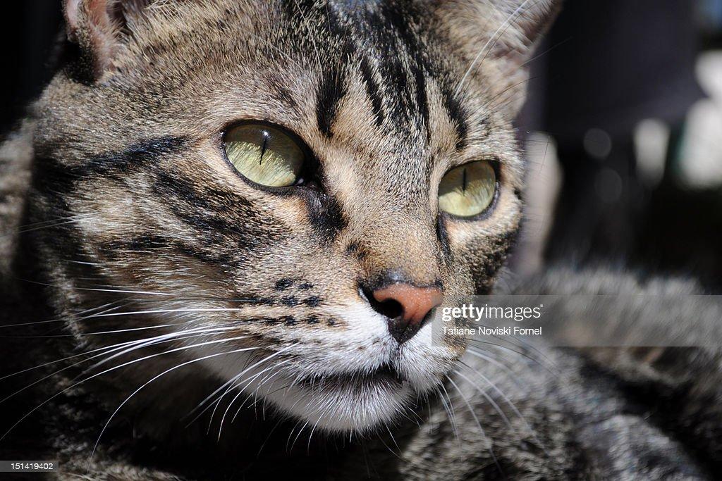 Cat face : Stock Photo