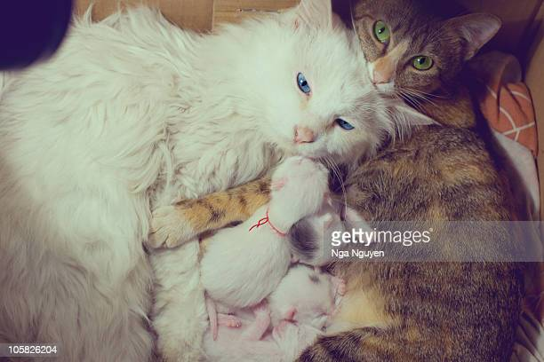 a cat family - medium group of animals stock pictures, royalty-free photos & images