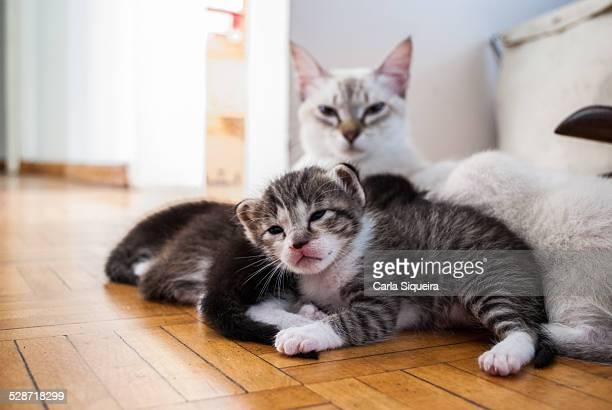 cat family - gattini appena nati foto e immagini stock