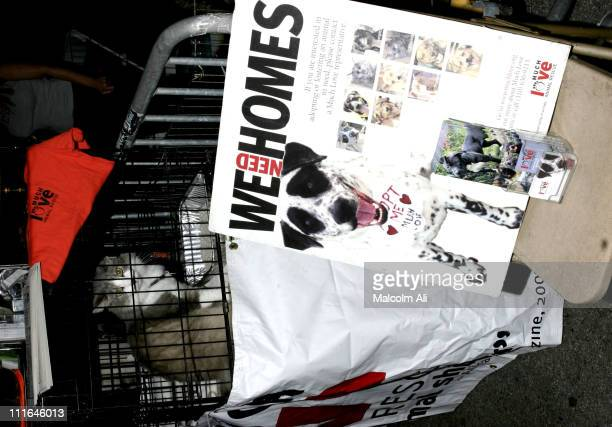 Cat for adoption during Pals2Pets Friends Fundraiser at Les Deux Cafes in Hollywood, California, United States.