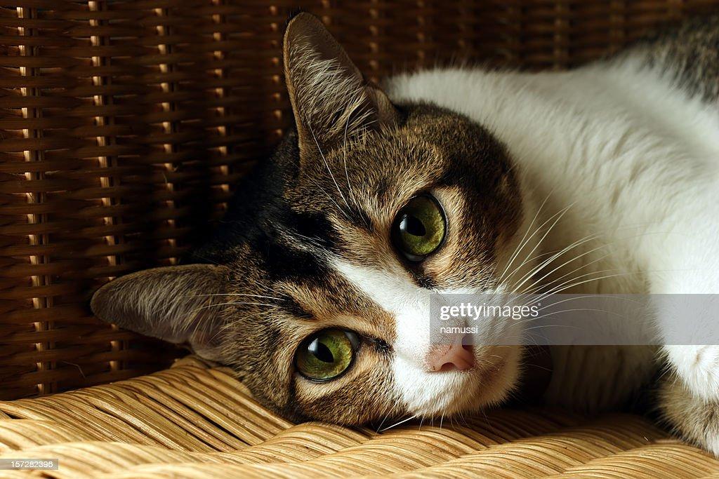 Cat #2: forlorn feline : Stock Photo
