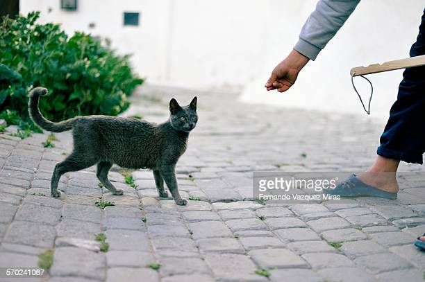 cat from azemmour,morocco - undomesticated cat stock pictures, royalty-free photos & images