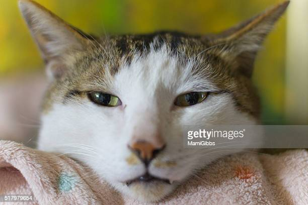 cat funny face - mamigibbs stock photos and pictures