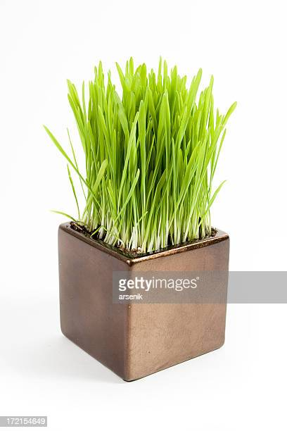 cat grass - bush stock pictures, royalty-free photos & images