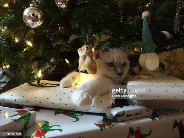 cat hiding under a christmas tree - christmas kittens stock pictures, royalty-free photos & images