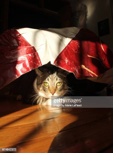 cat hiding under a torn shopping bag - cat hiding under bed stock pictures, royalty-free photos & images